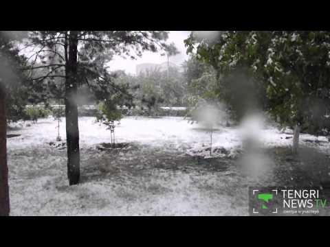 Тюльпаны в сугробах. Снегопад обрушился на Семей (видео)