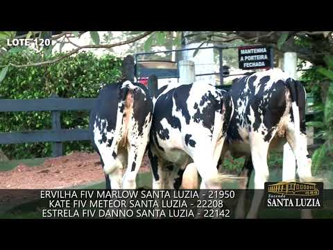 LOTE120