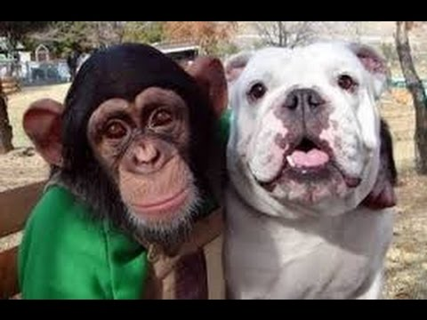 Video Monkey and Dog go shopping in Supermarket (HD) - Funny Show download in MP3, 3GP, MP4, WEBM, AVI, FLV January 2017