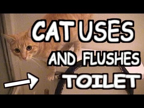 CAT USES TOILET THEN FLUSHES