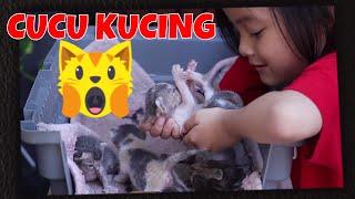 Video CUCU KUCING KITTY UDAH LAHIRAN  - Anak Kucing Moly yg Lucu MP3, 3GP, MP4, WEBM, AVI, FLV Agustus 2018