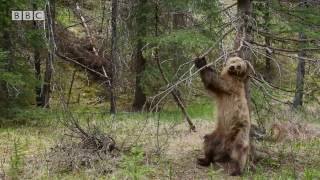 Those crazy dancing bears...