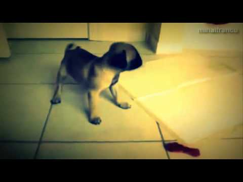 Funny Angry Dogs Barking And Growling Compilation 2014 Dog Barking Videos