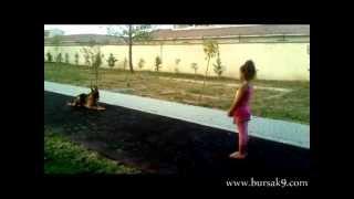 Profesyonel Köpek Eğitimi 2 videosunun kapak resmi