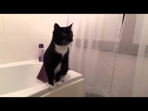 Katt vinkar till sig själv i spegeln