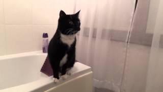 Ce chat analyse ses gestes face à un miroir
