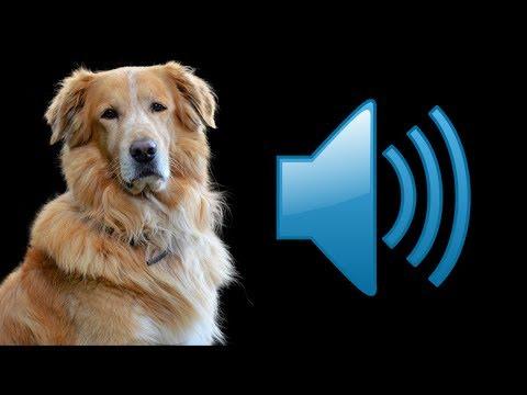 🔊Top 10 sunete de câini care vă enervează animalele de companie!