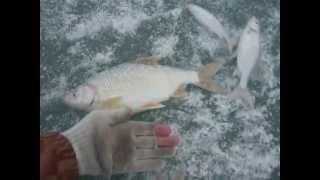 Зимняя рыбалка на озере Конурка