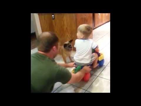 il papà spinge il bambino su un giocattolo, il cane lo porta indietro!