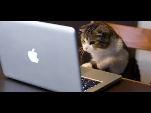 Funny cat videos: Cats's discovery | cat videos funny | pet rescue