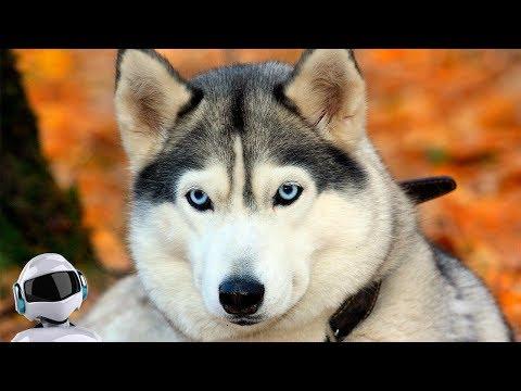 10 добрейших пород собак в мире