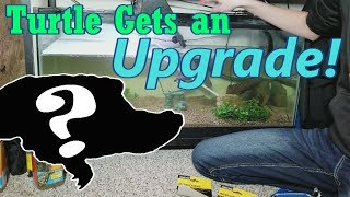 Setting up New and Improved Turtle Tanks! by Snake Discovery