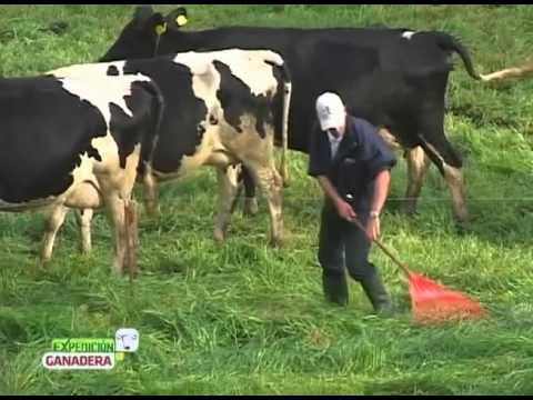 ganado leche - BPG: Hacer las cosas bien y dar garantía de ello,protegiendo el medio ambiente y garantizando el bienestar de los trabajadores y de los animales.