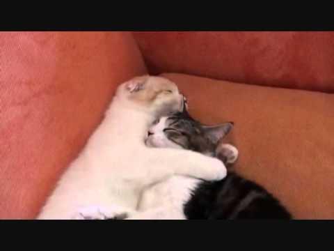 due gatti più teneri del web!