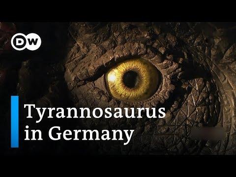 The dinosaur village | DW Documentary