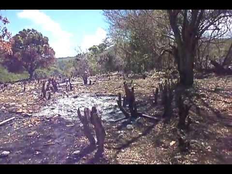 Denuncian un crimen ambiental en Barahona!!