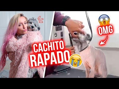 CACHITO SE AFEITÓ Y ESTO PASÓ!!! LO RAPARON!!!   31 Ago 2018