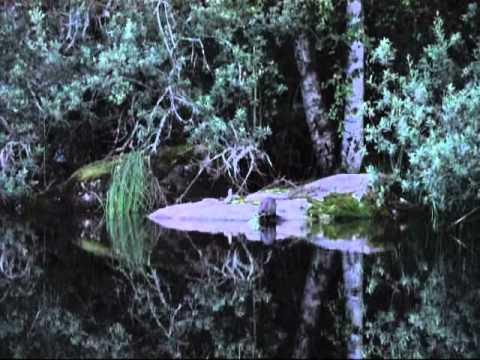 Video of Edens Garden B&B