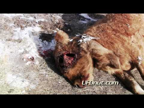 UFOnut.com - Episode 004: Aaron Cattle Mutilation