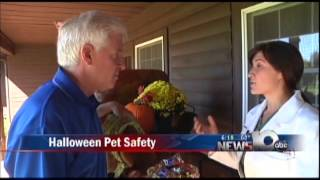 Pet Connection Extra - Halloween Safety for Pets