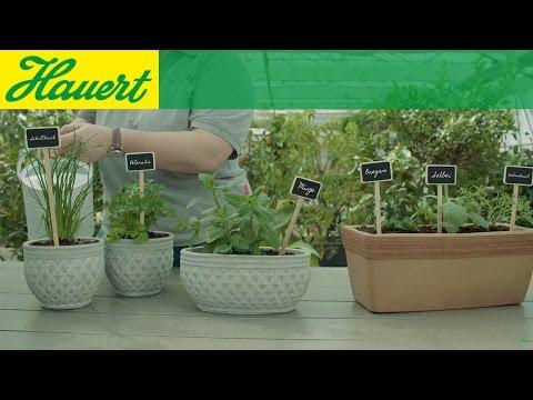 Lust aufs Gärtnern? Ein Kräutergarten für Ihren Balkon