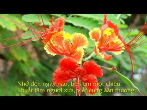 Phượng Xưa – Nhạc :Nguyễn Quyết Thắng – tiếng hát:Phạm Văn Hưng