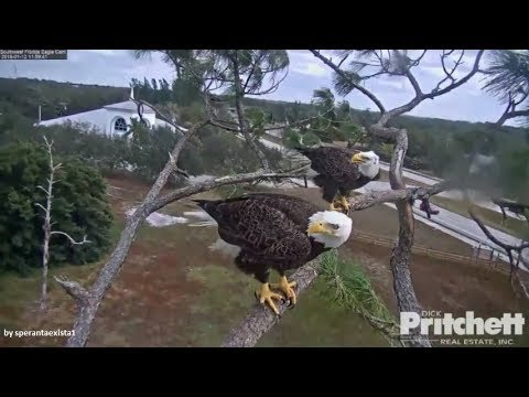 SWFL Eagles~ 1.12.18 ~ Intruder Chased Away By Mom & Dad! Slo Mo