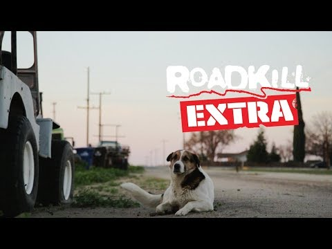 A Tribute to Big Joe the Shop Dog - Roadkill Extra