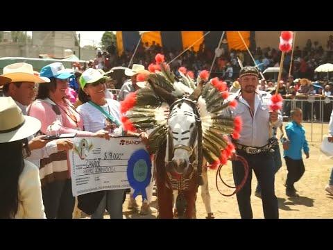 Tag des Esels in Mexiko: Einmal König der Tiere sei ...
