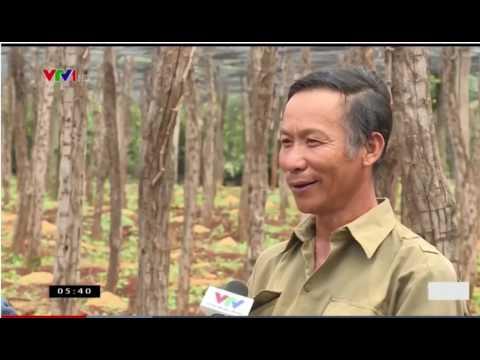 Cảnh báo Hồ Tiêu Chư Sê 2017