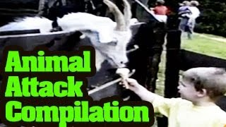 Funny Animals Videos - Funny Animal Attack Compilation 2013