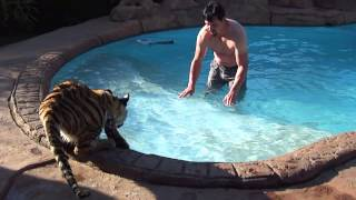 Why do tigers get in the water in the first place ? full download video download mp3 download music download
