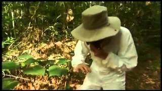 Gympie Australia  City pictures : Planta peligrosa en Australia Gympie-Gympie