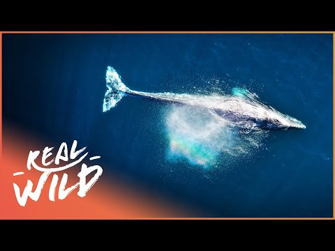 Oceans: Life Beneath The Waves (Wildlife Documentary) | Magic Of Nature S1 EP10 | Real Wild