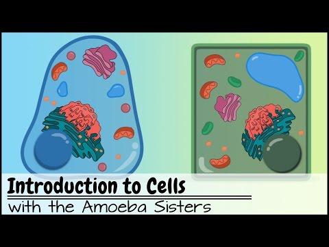 cells video bowenbiology. Black Bedroom Furniture Sets. Home Design Ideas