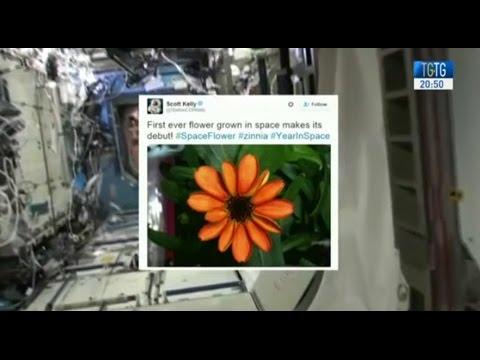 dalla iss americana arriva il primo fiore spaziale
