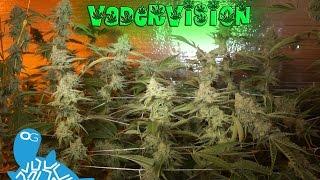 Bud Porn - Alien Rift Oside by VaderVision