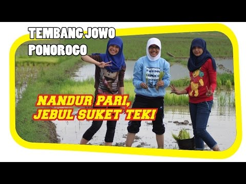 Video Komedi Ponorogo, Jawa Timur -  Nembang Lagu Tak Tandur Pari, Jebul Tukule Malah Suket Teki download in MP3, 3GP, MP4, WEBM, AVI, FLV January 2017