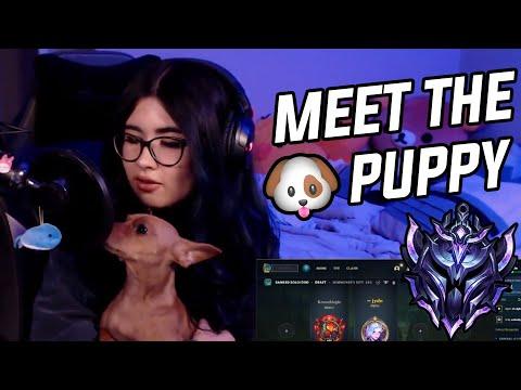 Diamond 3 Samira | Meet My Dog