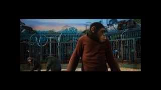 Nonton RISE OF THE PLANET OF THE APES (2011): Ceaser Confronts Rocket Film Subtitle Indonesia Streaming Movie Download