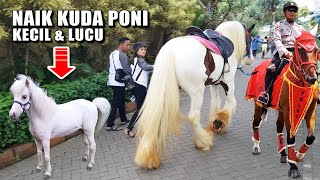 Video Naik KUDA PONI Mungil ~ Lagu NAIK DELMAN istimewa MP3, 3GP, MP4, WEBM, AVI, FLV Oktober 2018