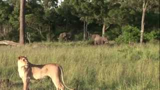 African Animals In The Wild- Maasai Mara Kenya