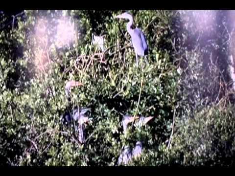 TIẾNG HÁT – Nhạc và lời: Vũ Thái Hòa – Tiếng hát: Thanh Thúy
