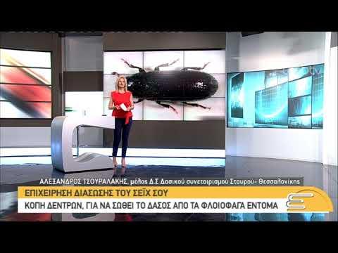 Επιχείρηση διάσωσης του Σέϊχ Σου από τα φλοιοφάγα έντομα | 06/06/2019 | ΕΡΤ