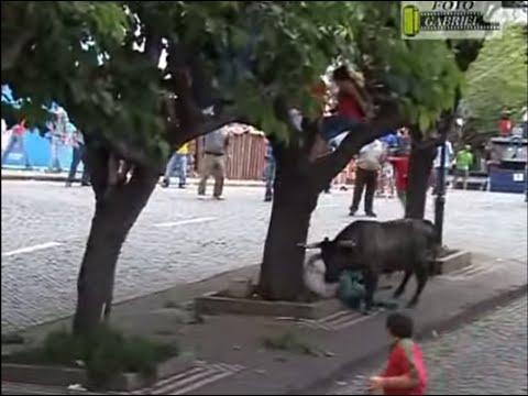 Nghịch dại với bò tót
