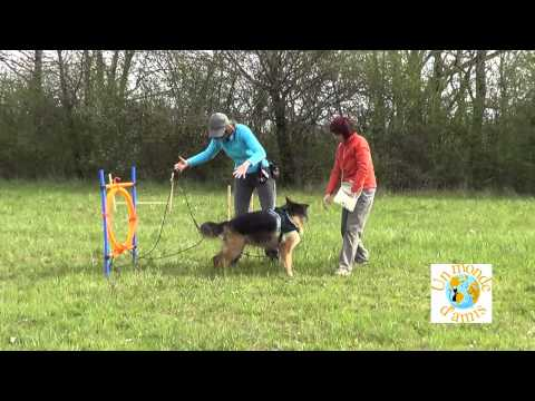 comment renforcer la complicité avec son chien