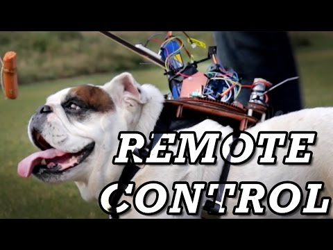 Control Your Bulldog by Remote Control