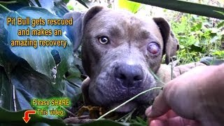 Pit Bull gets rescued - MUTED BY YOUTUBE - Alternative link below!!!