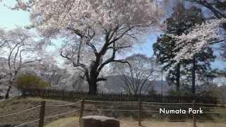 Numata Japan  city photo : SAKURA - Numata Park - JAPAN GUNMA 沼田公園の桜