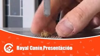 royal canin Royal Canin Presentacion